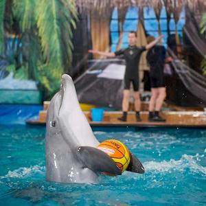 Дельфинарии, океанариумы Асино