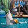 Дельфинарии, океанариумы в Асино